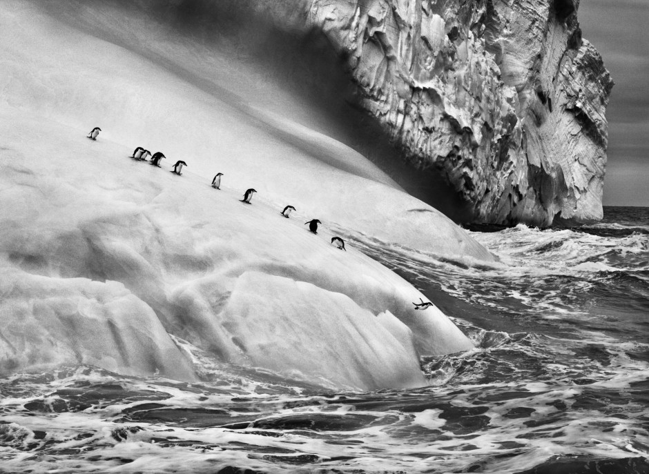 Penguins on an iceberg, South Sandwich Islands, 2009 / © Sebastião Salgado