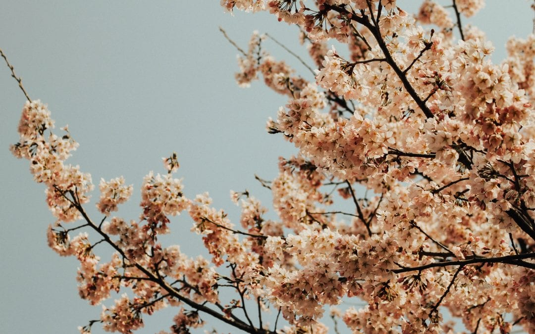 Fact Friday: Why is the merry month of May so merry?